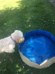 Poppy pool (6)