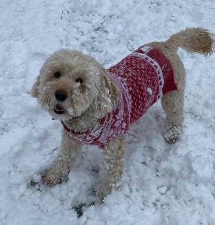 Poppy snow (3)