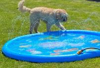 Poppy splash 3 (1)