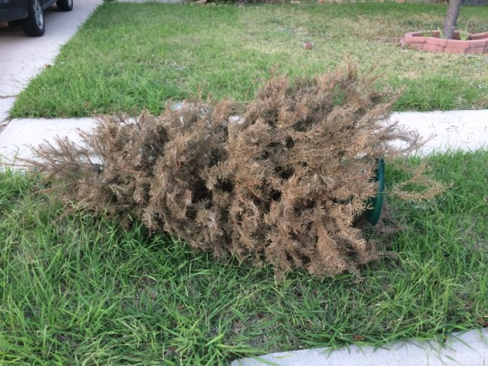 Recycle your christmas tree at t.y. park through jan. 20