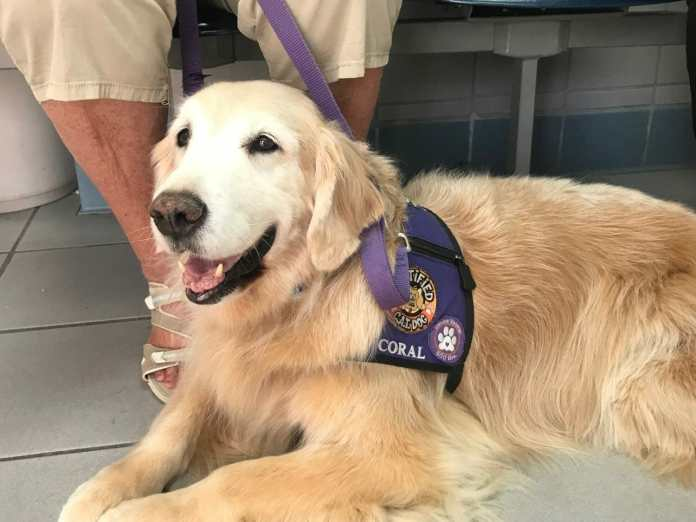 VCA Hollywood Animal Hospital to Offer Free Eye Exams for Service Animals May 17