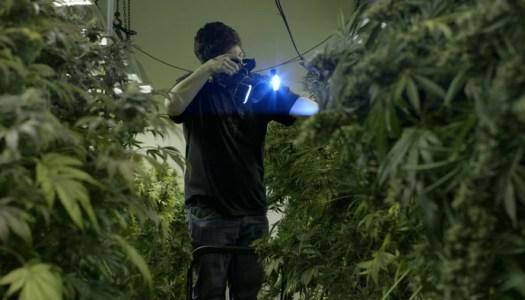 Pot Doc Captures Denver's Drug Experiment
