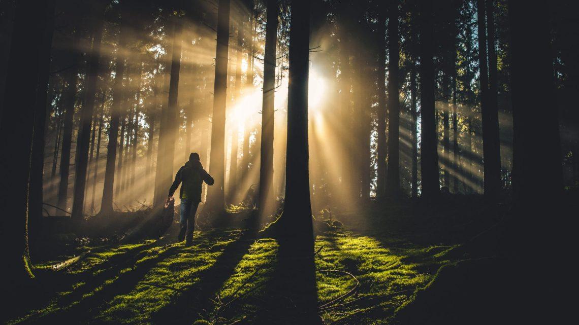Figure running towards the light in dim woodland setting