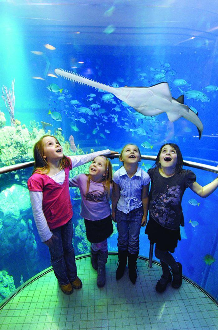 Scottish PR photography Panton Mcleod work in Hull aquarium shot of interior children looking at fish