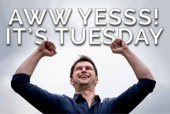 It's-Tuesday
