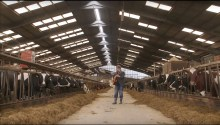 Music being played In Mackie's of Scotland cowshed
