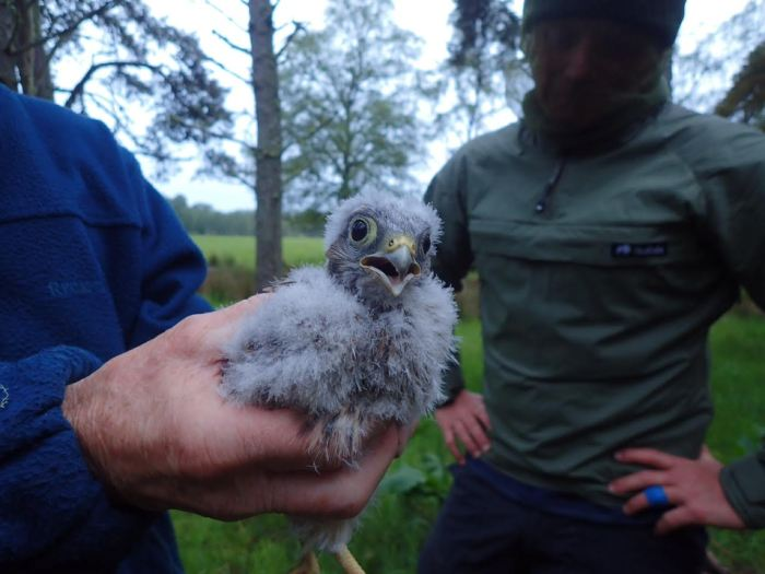 Scottish PR agency shares story of Eagle Couriers helping in eagle conservation