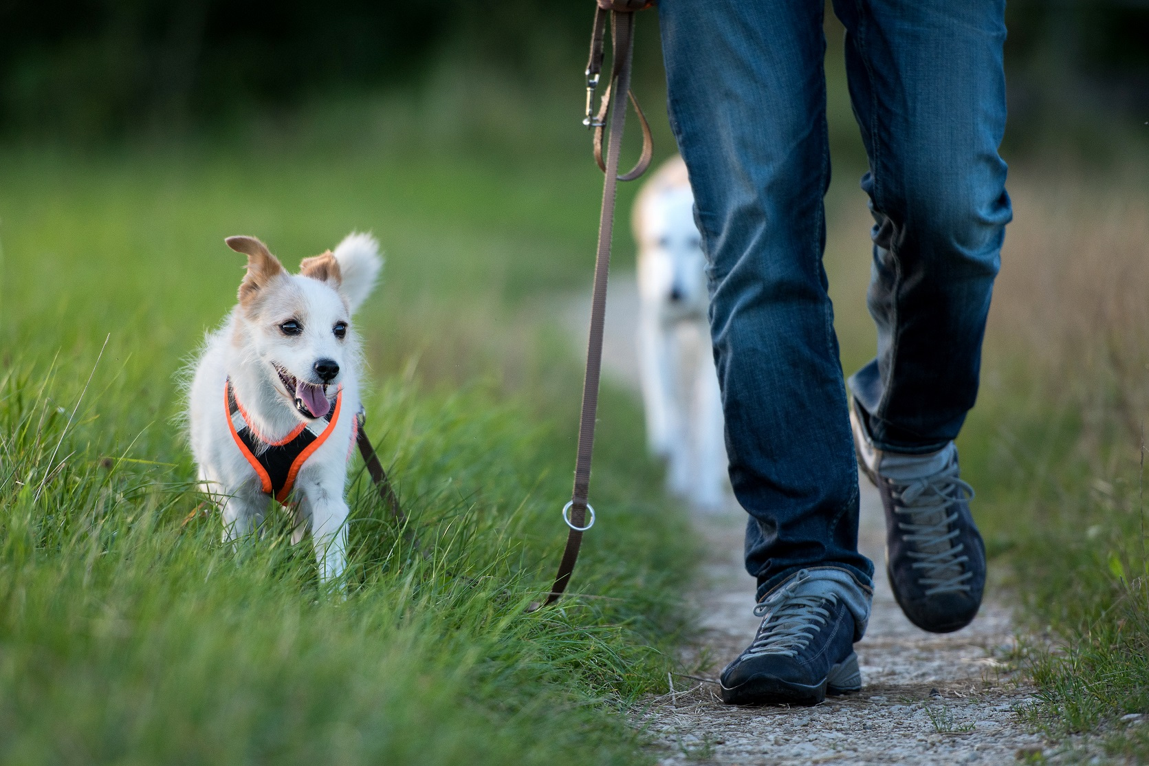 Dogs pawsitively impact national walking figures | Charity PR