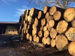 Unser Holzbestand