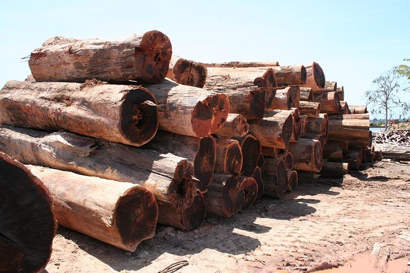 Walaba trocknen HolzLand Köster