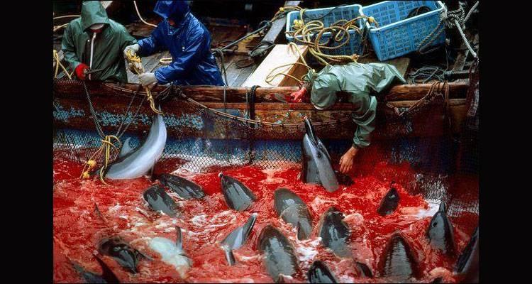 Taiji: un mar de sangre