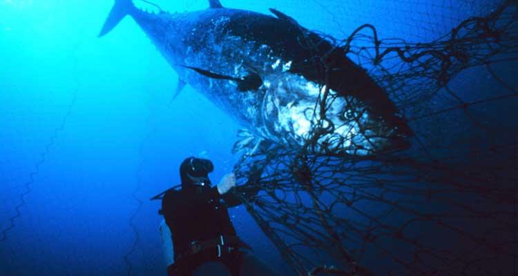 El atún rojo: ¡Tú puedes salvarlo!