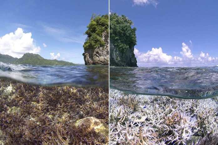 El coral se está quedando blanco