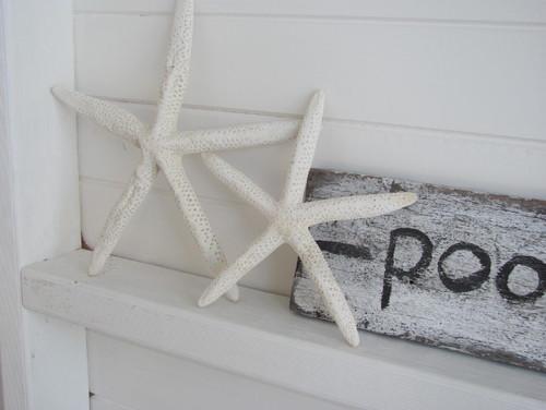 マリンディスプレイ:海星をアクセントに