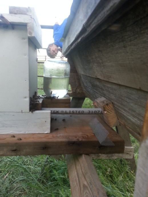 Bees hanging out by the sugar water feeder (Just until they get established in the TBH