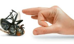 Pest-Control-Tips-And-Solutions