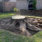 A Detailed Guide to Proper Tree Stump Removal