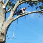 Trimming or Removal Expenses of Trees or Shrubs: A Detailed Guide