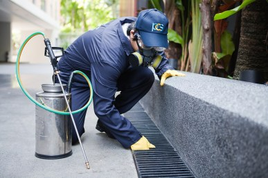 pest control sevices
