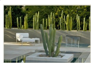 Pool in Palm Springs, Steven Martino landscape architect, located in Las Palmas, renovation