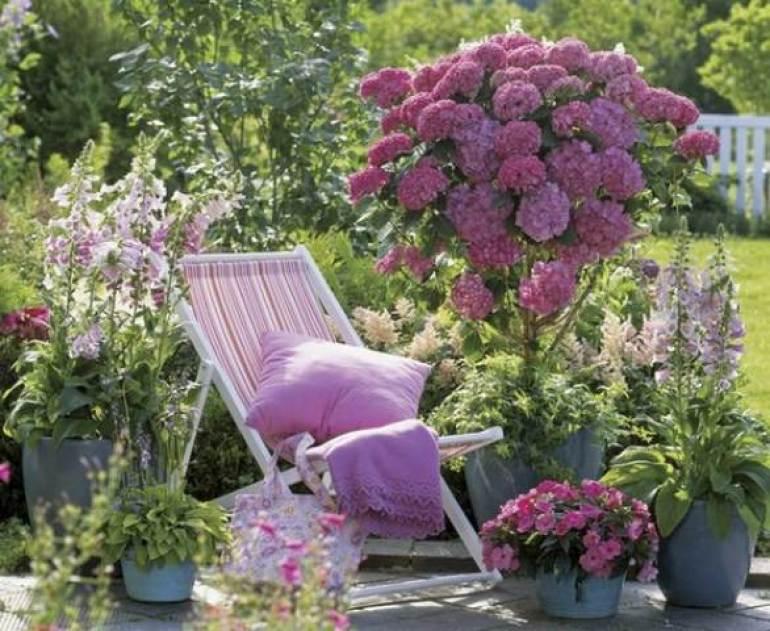 Purple Garden Ideas