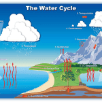 Water Cycle Information On Land