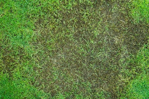 Bald spot in lawn needs grass seed