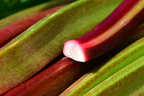 Summer garden diy tips and ideas growing rhubarb