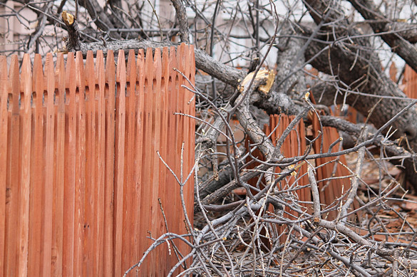 Wooden fence damaged by fallen tree