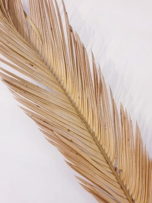 Palm Long-0
