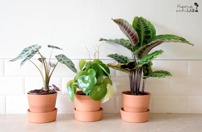 como regar las plantas en vacaciones