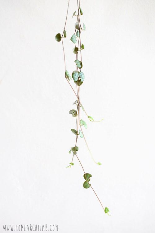 como cuidar plantas fáciles