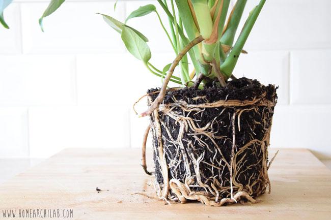 plantas fáciles