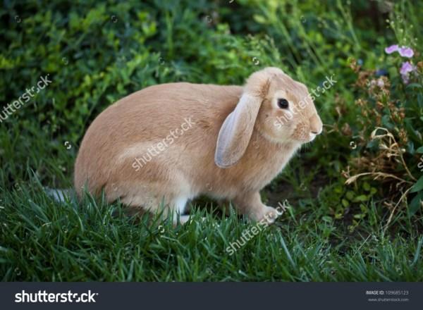 rabbit - income report