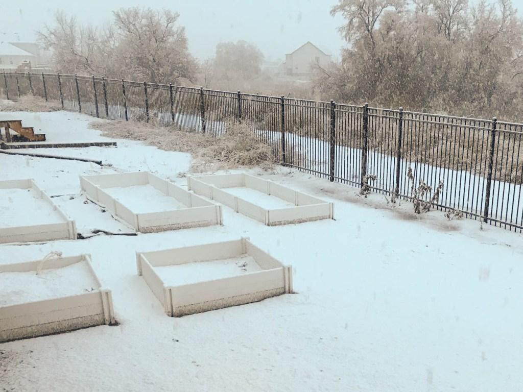Gardening in January in Utah County - My Backyard Garden in the winter