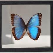 homebarn-single-framed-butterflies-1