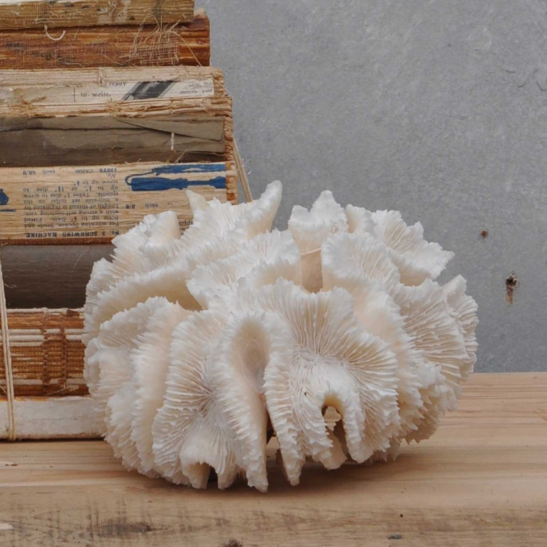 Vintage Marine Coral Specimen – Brain Coral