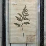 Framed Pressed Botanical Artwork