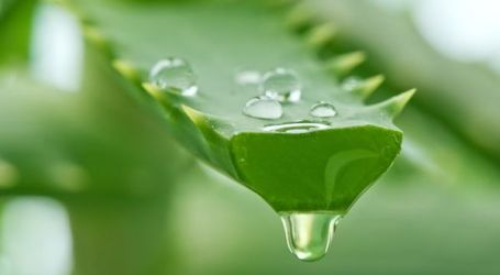 Mannatech Brings Highest Grade Aloe Product in the World to China