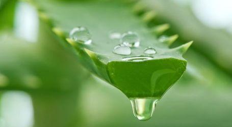 Mannatech Video Reveals Secret Aloe Vera Process