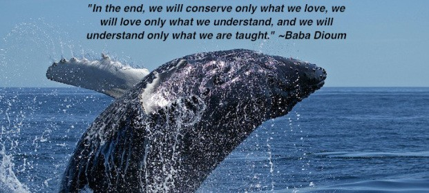 Quote of the Week: We will conserve only what we love