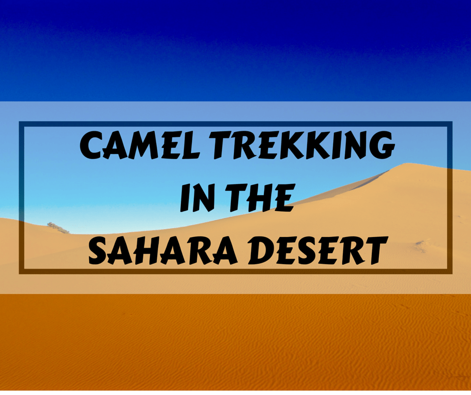 Camel Trekking in the Sahara Desert of Morocco