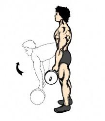 stiff_leg_deadlift.jpg (217×250)
