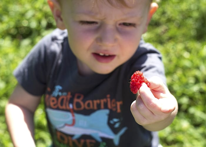 Berry Picking Story Time- Go Pick