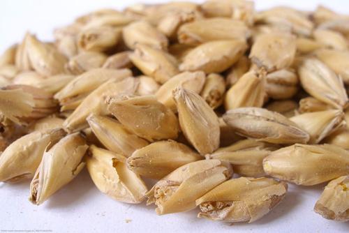 wunder grain