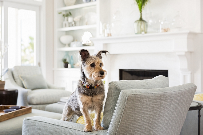 Pets and Furniture Hows to