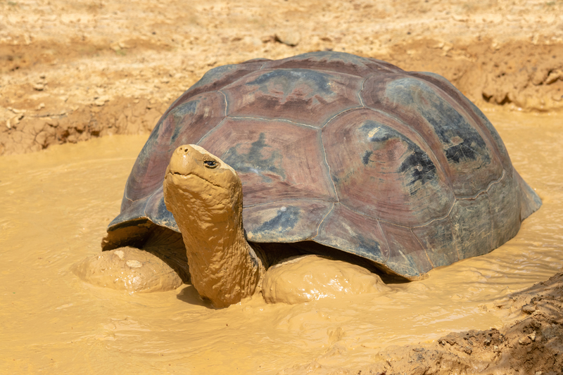 What a Turtle in the Mud Knows About Success that You Might Have Forgotten