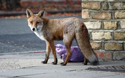 fox4252