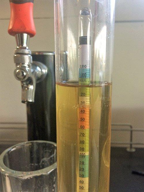 Hydrometer reading of a freshly hopped hard cider