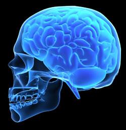 مخ شخص مصاب بالمعايير المزدوجة